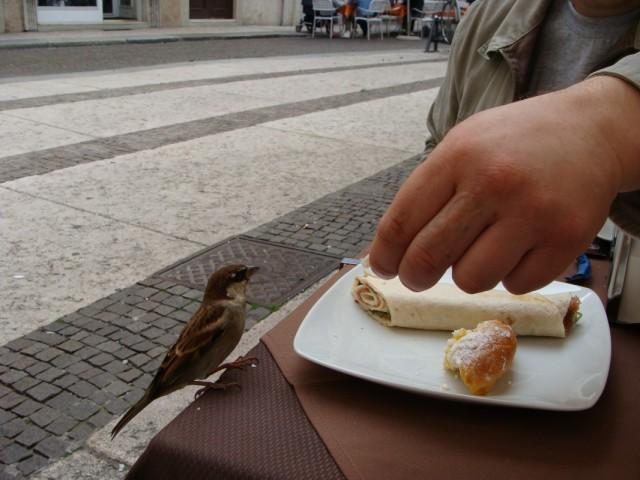 Завтрак в уличном кафе. Заодно подкормил веронского воробья.