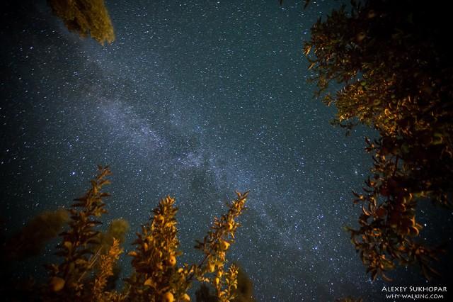 Долина Нубра, ночь в яблоневом саду
