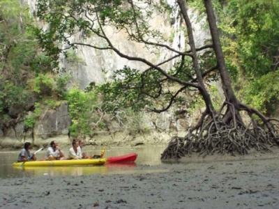 Мангровый лес на Андаманах