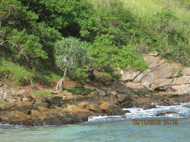 """""""Синеюсь"""" за деревцем %-))) Фотки с фотика Товарища, оставшегося на пляже"""