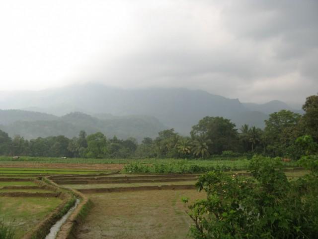 Горы и рисовые поля