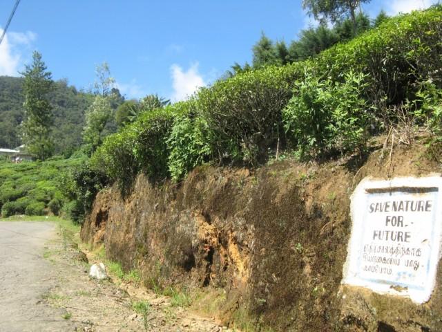 """Начинаются чайные плантации. Картинка призывает """"Сохранять Природу Для Будущего"""" :-)"""