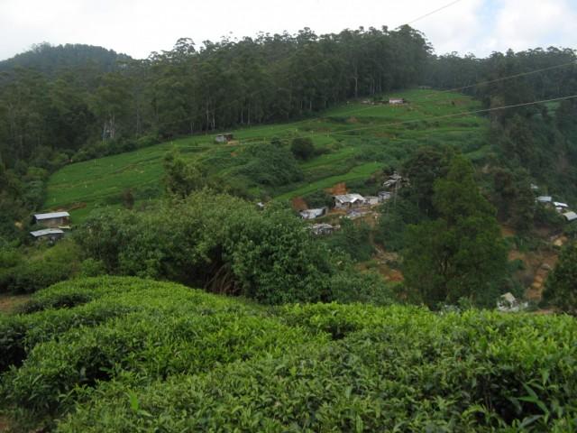 Тамильские поселения чуть ниже. Это их жители ходят сюда, к Лингаму. А мне сейчас наоборот - вниз, к ним, к тамилам)))