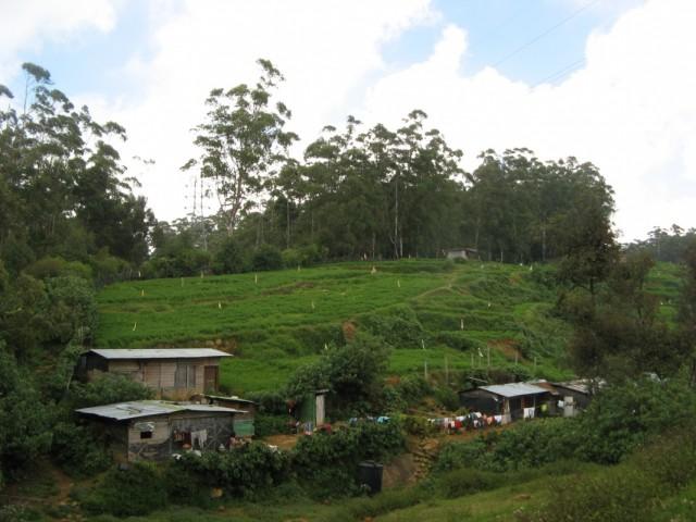 Тамильская деревушка и поле за ней