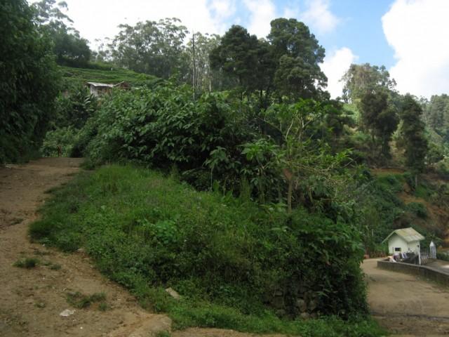 Незримая но очень ощутимая граница между тамильскими Поселениями в Горах и туристической Нувара Элией ниже...