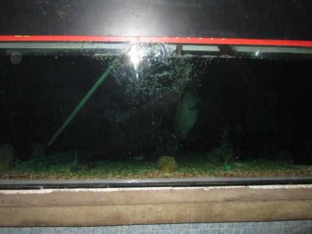 Аквариум с рыбами на выходе с платформы