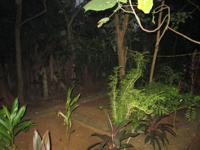 Herbal Garden - Ботанический Сад. Растительность