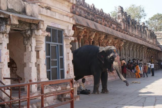 Слоник в храме