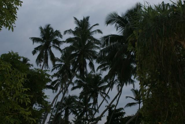 Мрачные пальмы