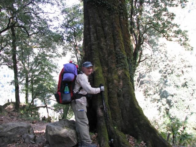 у деревца