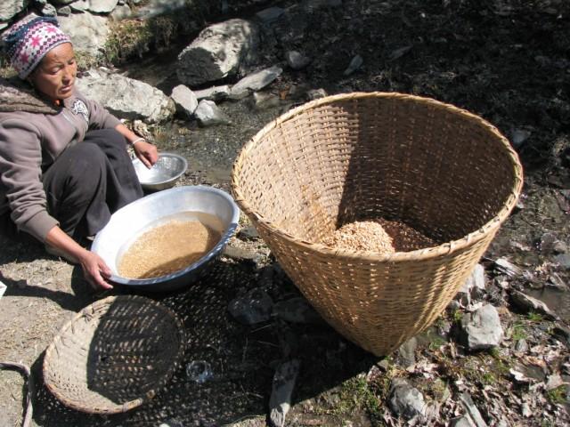 промывка ячменя