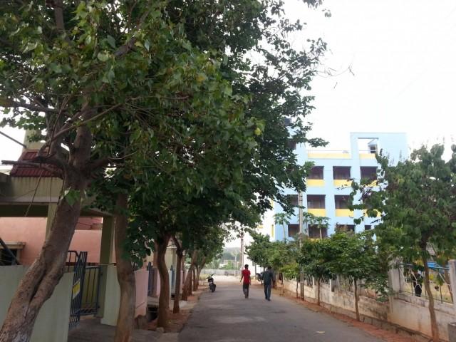 слева девчачьи коттеджи, синее здание - хостел для мальчиков