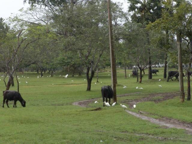 древняя Anuradhapura после дождя