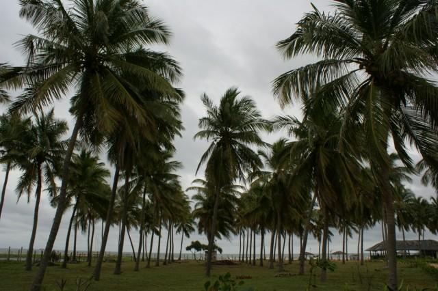 пальмовая роща в гесте Sea View, Nilaveli