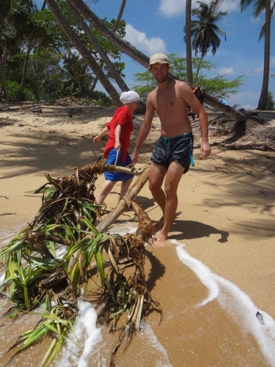 убираем с пляжа выброшенную пальму. Tangalle