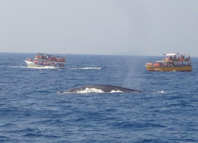 киты в океане рядом с Mirissa