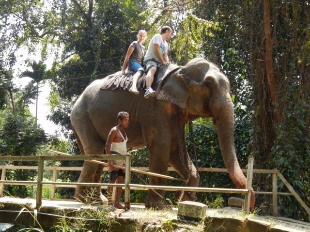 ферма слонов в Kegale