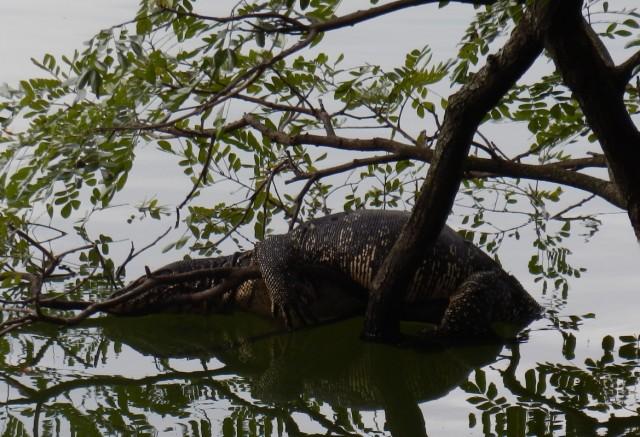 нечто страшное в озере Kandy