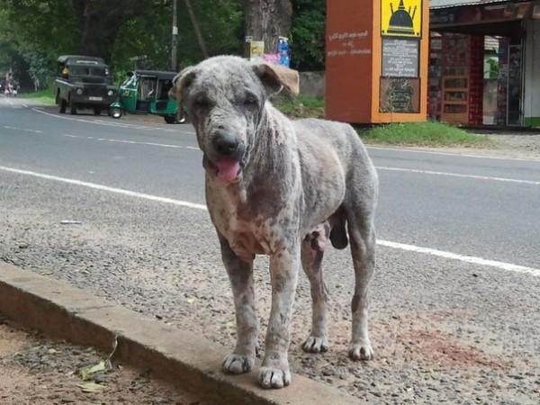 многие собаки больны демодекозом (подкожный клещ), лечить их никто не собирается(((