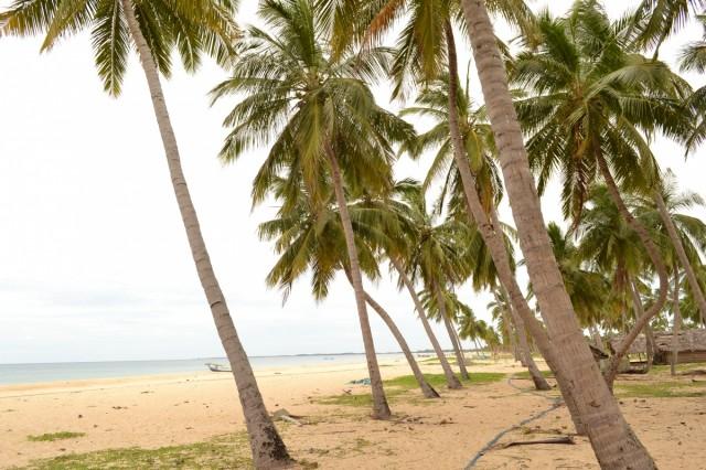 Кокосовая плантация на пляже... или наоборот