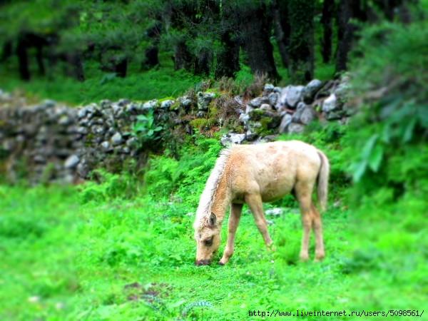 Лошадка, гдето в районе Калопани