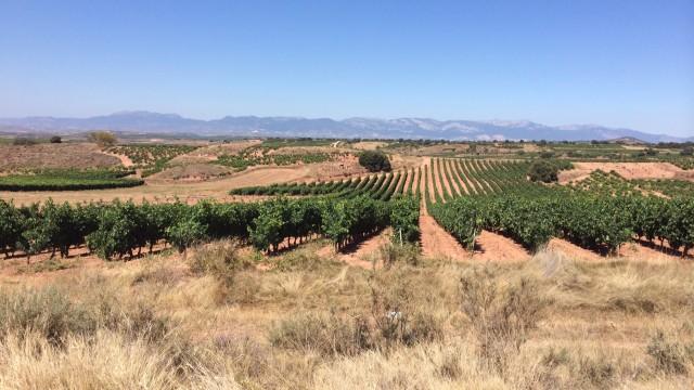 Виноградники в ла риохе