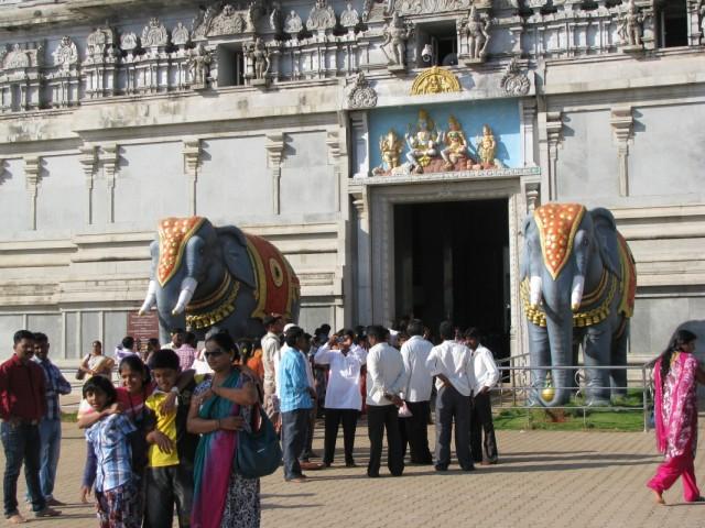встречают слоны