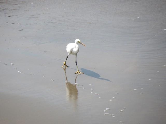 белый птиц