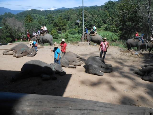 шоу маленьких слонят