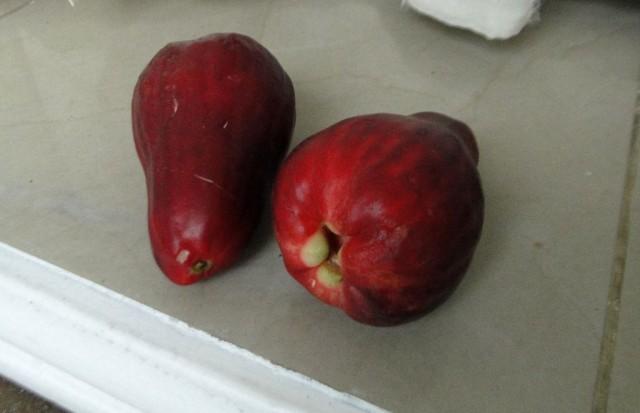 т.н. ямайское яблоко