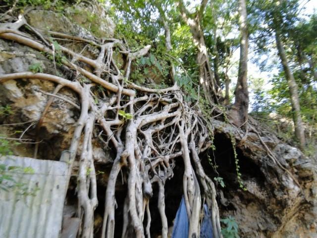 корневое прикрытие пещеры