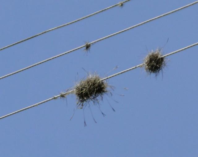 похоже, что гнезда, но этих птиц ни разу не видать