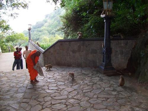 Монах, кормящий обезьянок