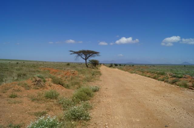 Пустынная дорога