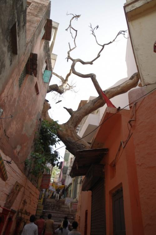 Деревья умирают стоя