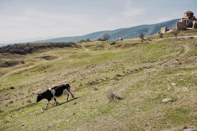 Бегающая по горам местная живность