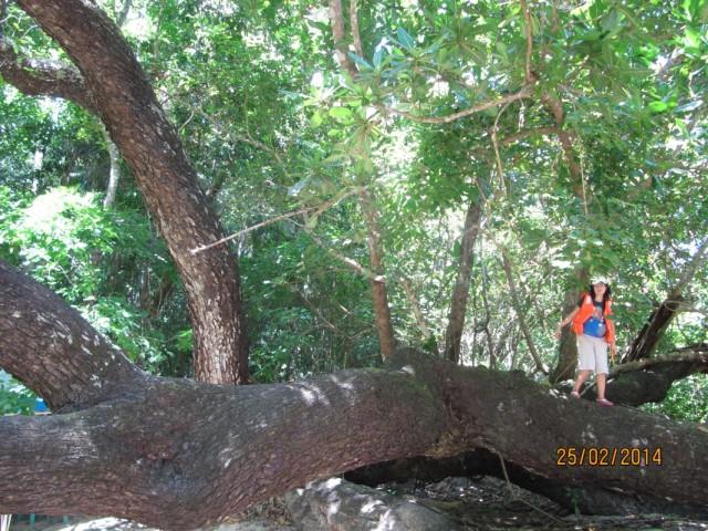 большая река, большая пещера, большие деревья