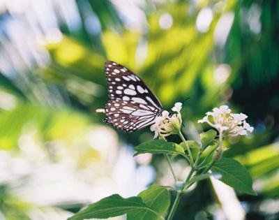 Сад бабочек в Coconut Lagoon Hotel / Керала