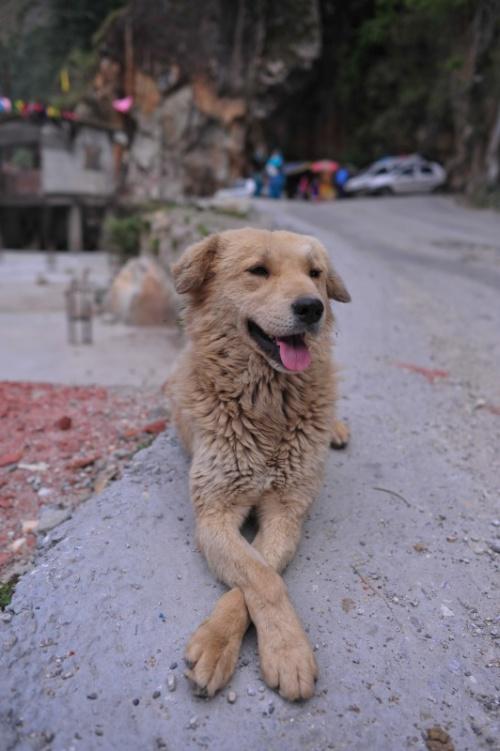 Наша индийская собачка