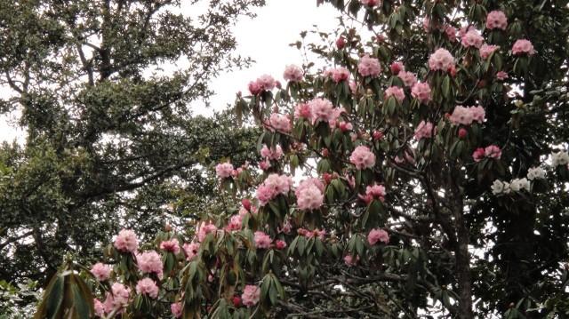 Розовые особенно хороши!