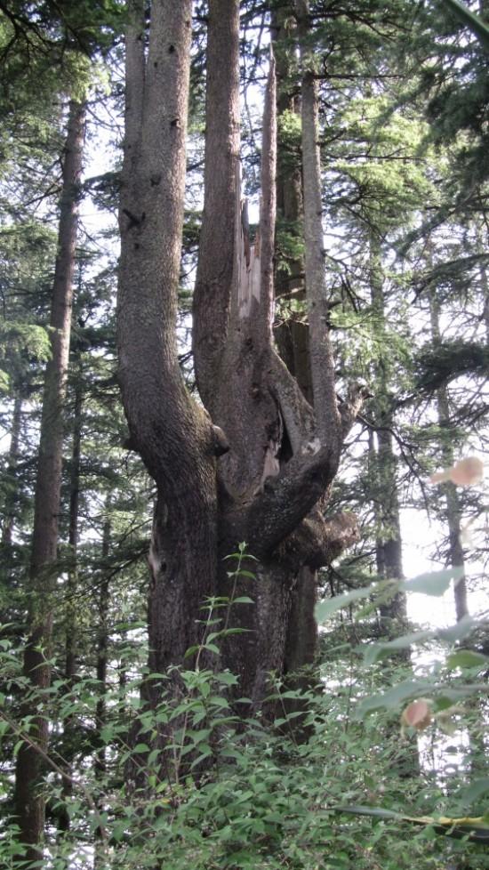 лес в начале пути