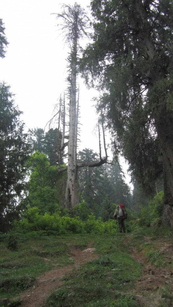еще лес
