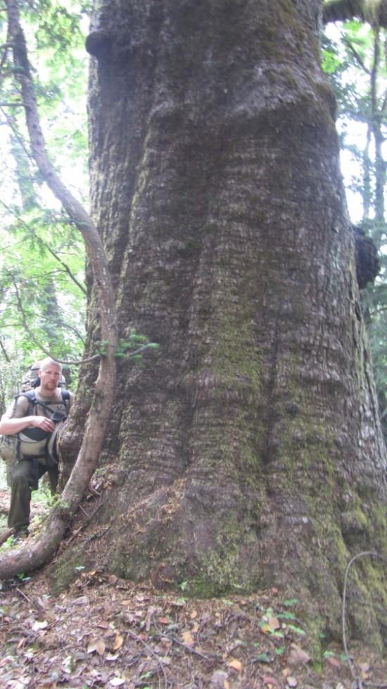 первая ночевка была у этого дерева