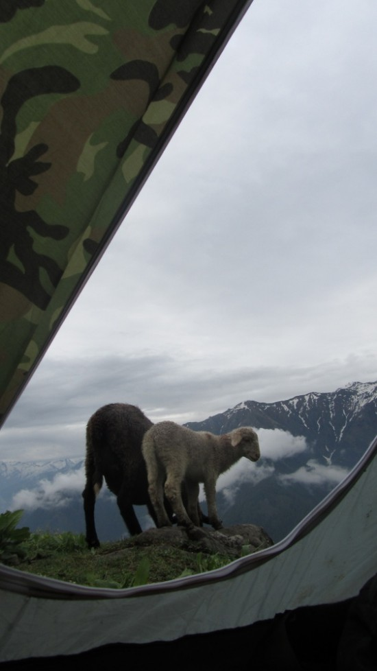 там же,вид из палатки