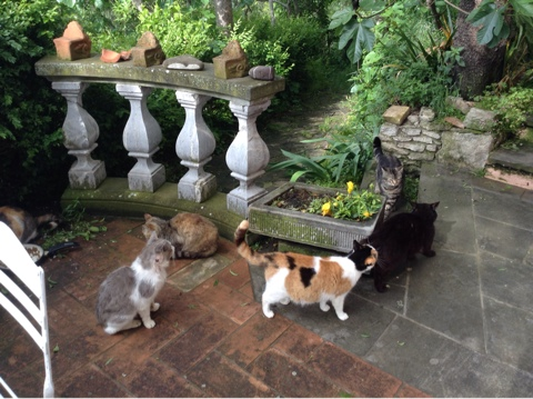 Во дворике