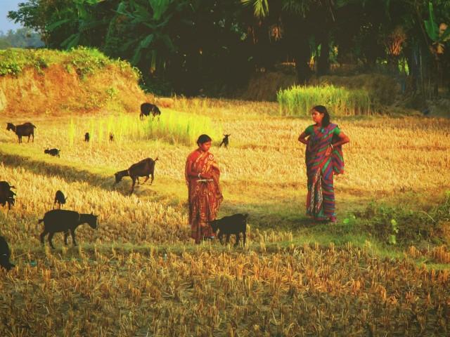 Сундарбанская деревушка