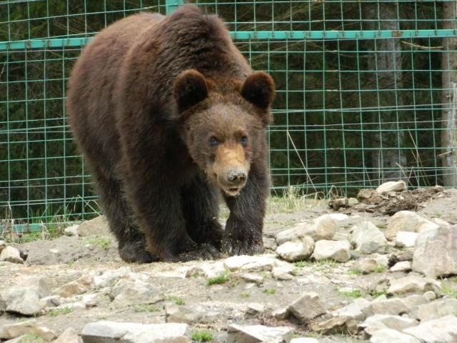 а вот и медведи
