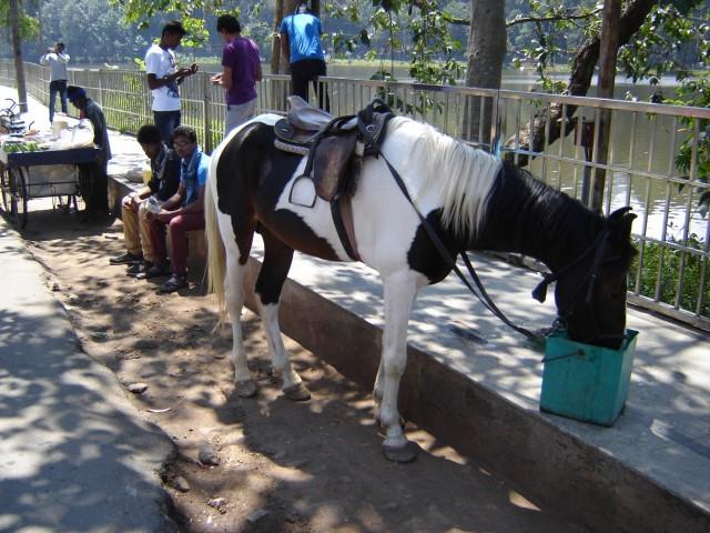Лошади не коровы, на них индусы катаются вокруг озера