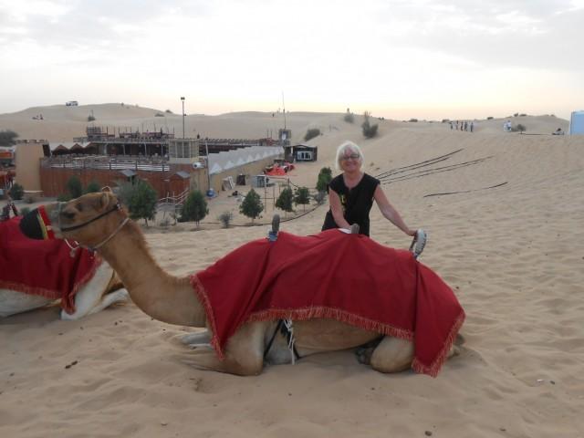 на верблюдах