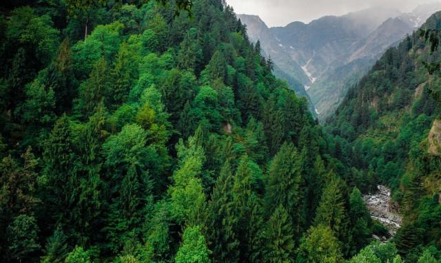 лес и перевал